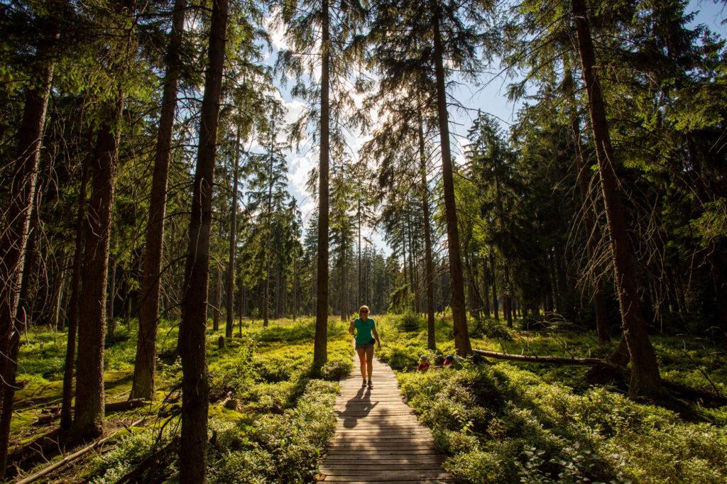 Las iglasty, na środku zdjęcia drewniana ścieżka, po której idzie młode kobieta. Od tylu rozświetlona jest przez piękne słońce, padające przez drzewa.